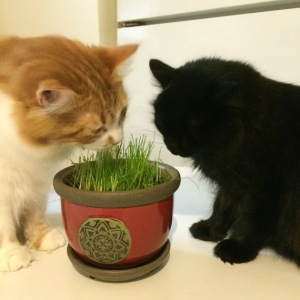 They loves grass!
