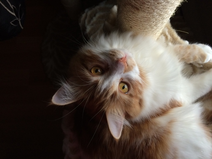 my cat Bibi