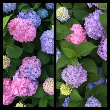 New Phototastic Collage Purple (2)